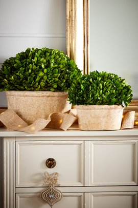 Oval Preserved Boxwood Topiary, Set of 2