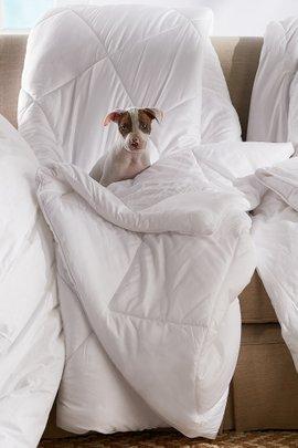 Blissful Bamboo Comforter