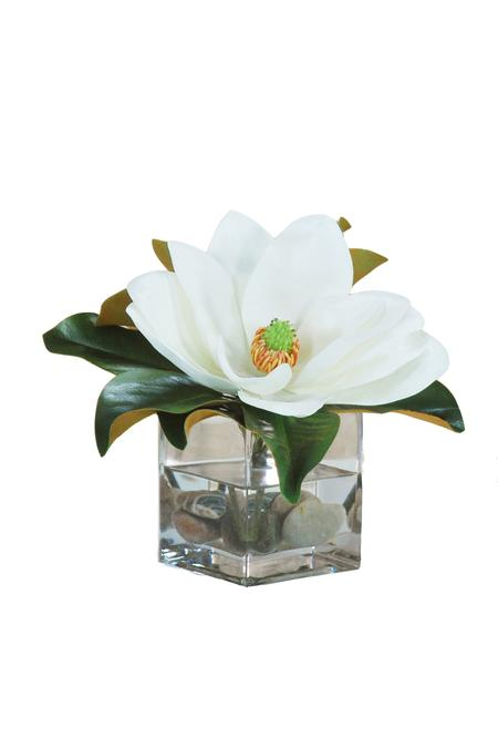 Single Magnolia in Square Glass