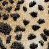 Swatch Image LEOPARD